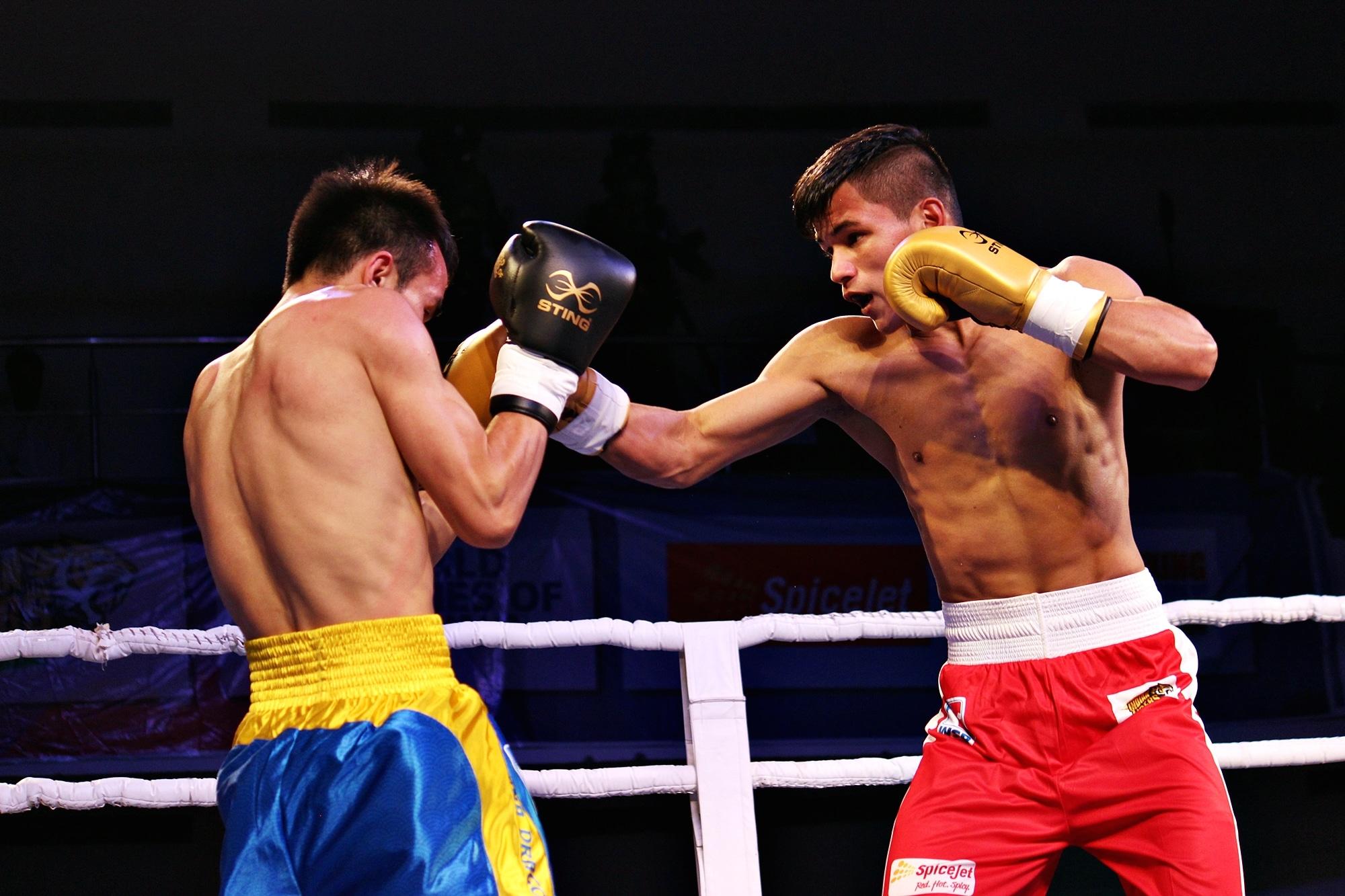 world series boxing kreedon