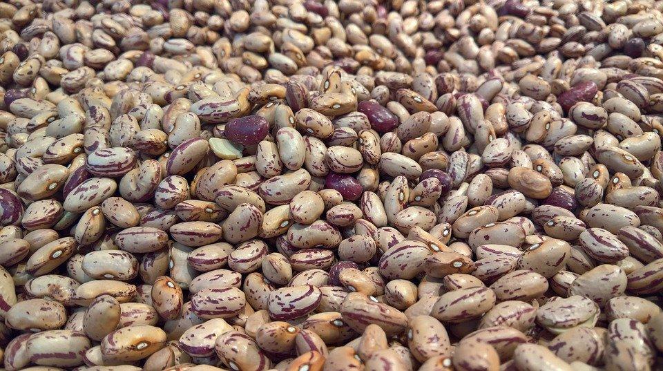 Beans KreedOn