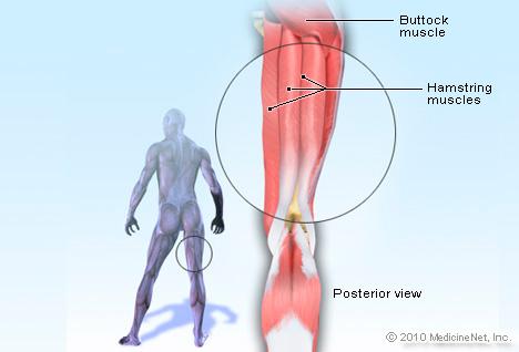 Hamstring Injury KreedOn